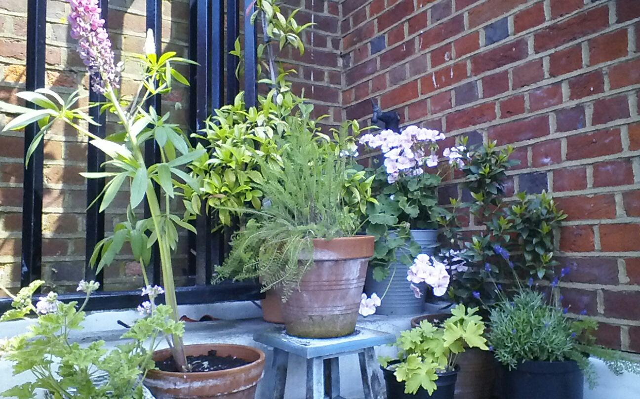 guerilla_roof_garden
