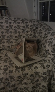 Loki_cat_newspaper