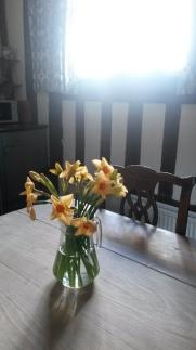 Daffodils, Peake's House, Landmark Trust, Colchester